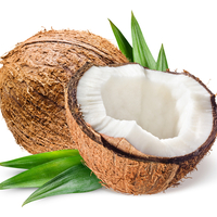 Aruba Coconut Type Compare to BBW®