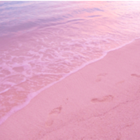 Pink Sands Type Compare to Yankee®
