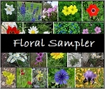 Floral Fragrances Sampler Pack